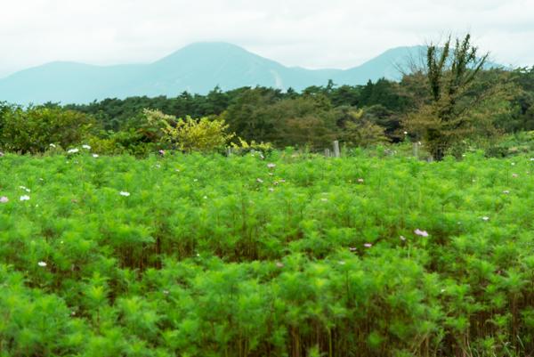 小岩井農場-3.jpg