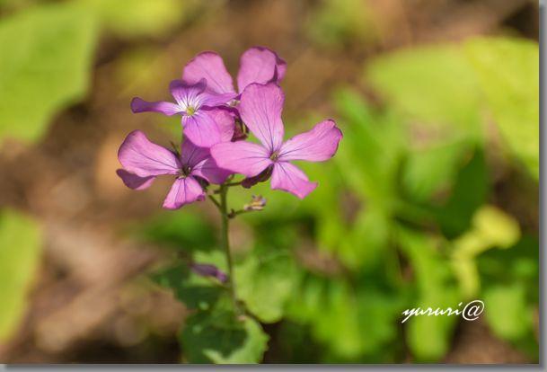 岩大植物園 -11-1.jpg