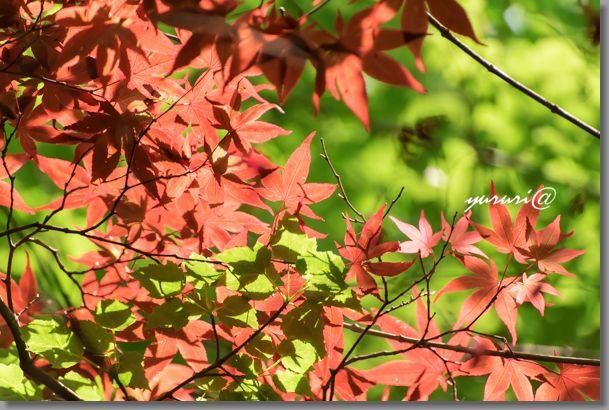 岩大植物園 -12-1.jpg
