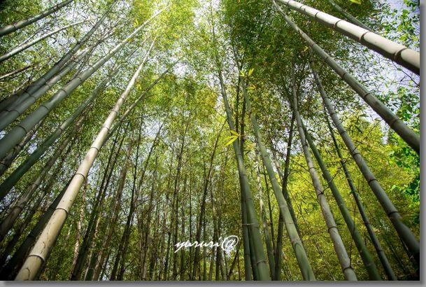 岩大植物園 -5-1.jpg
