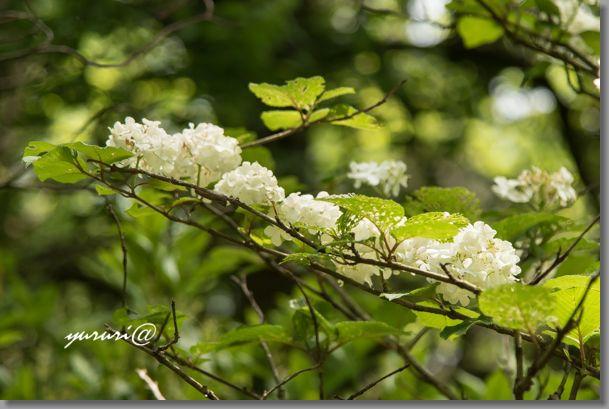 岩大植物園 -8-1.jpg