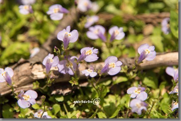 岩大植物園 -9-1.jpg