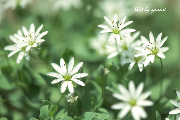 庭の花-11.jpg