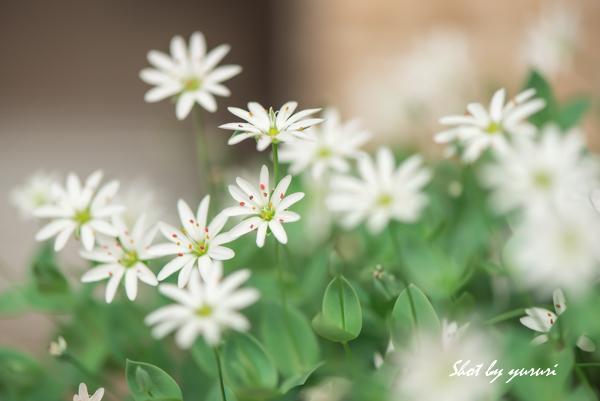 庭の花-12.jpg