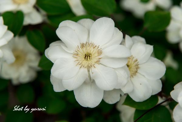 庭の花-20.jpg