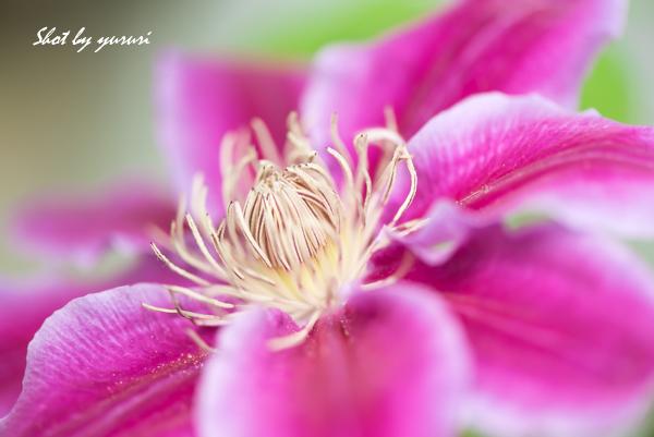 庭の花-21.jpg