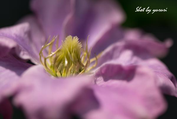 庭の花-22.jpg