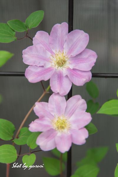 庭の花-23.jpg