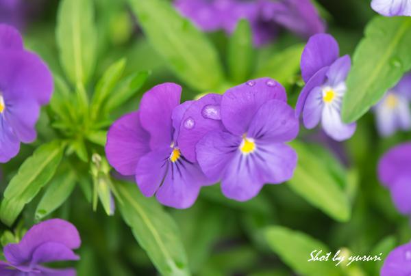 庭の花-34.jpg