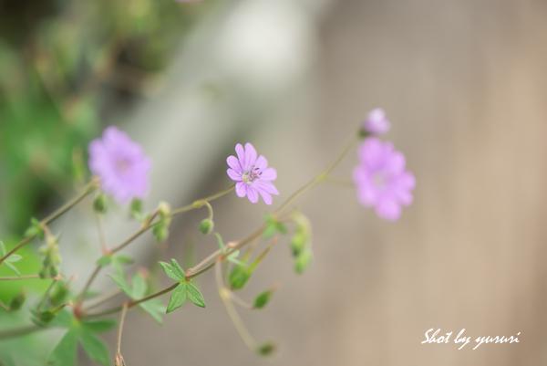 庭の花-36.jpg