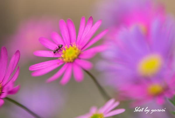 庭の花-40.jpg