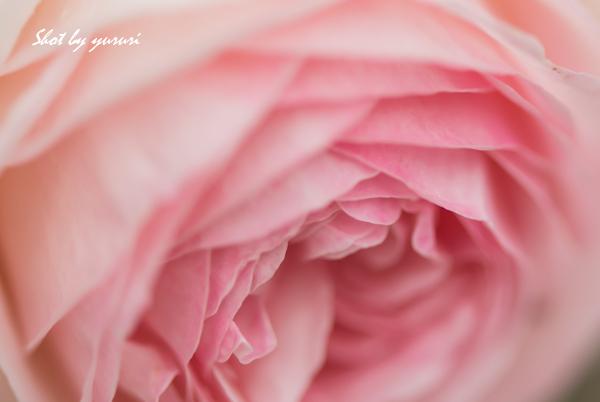 庭の花-47.jpg