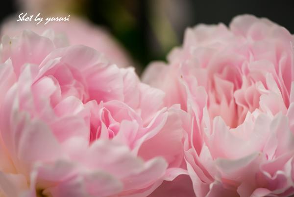 庭の花-50.jpg