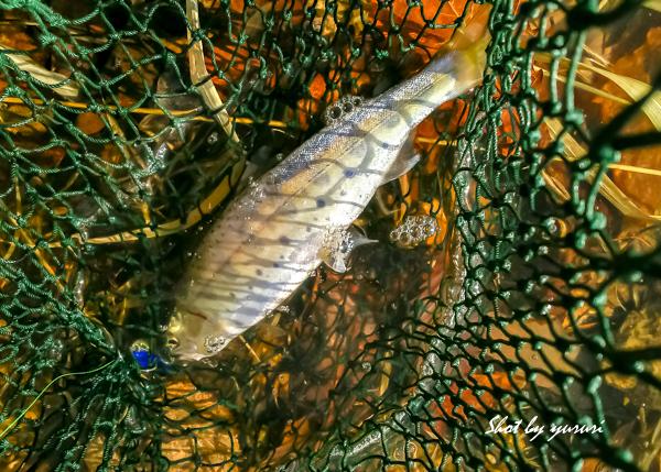 渓流釣り1-2.jpg