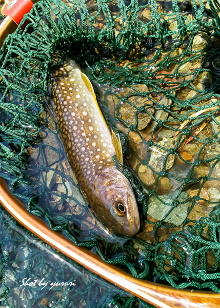渓流釣り1-4.jpg