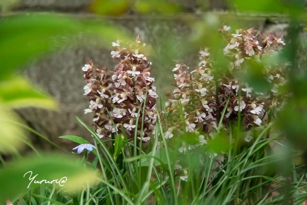 庭の花-3.jpg