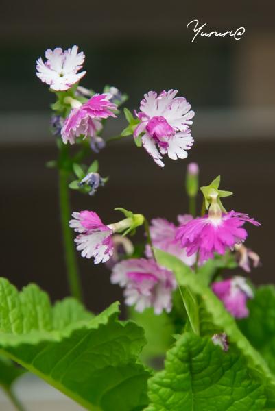 庭の花-4.jpg