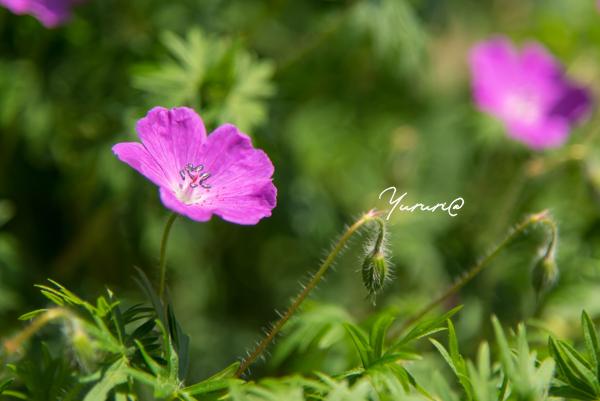 庭の花-5.jpg