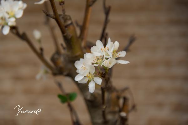 庭の花-6.jpg