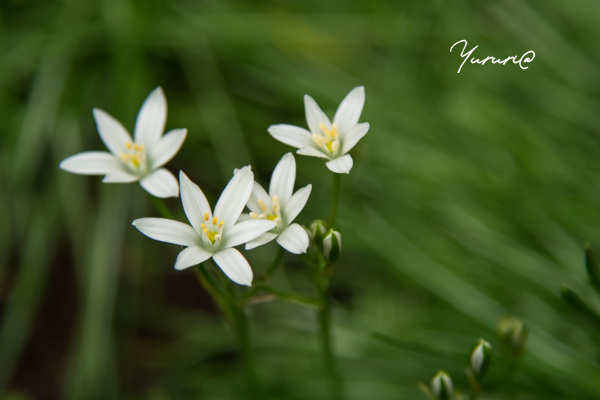 庭の花-7.jpg