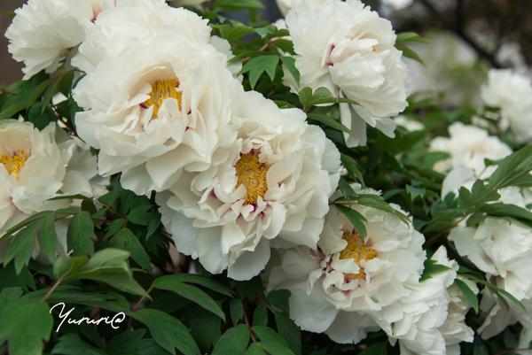 庭の花-9.jpg