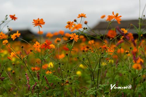 志波城古代公園-9.jpg