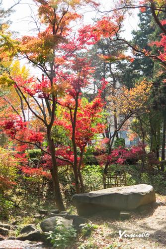 盛岡城跡公園-3.jpg