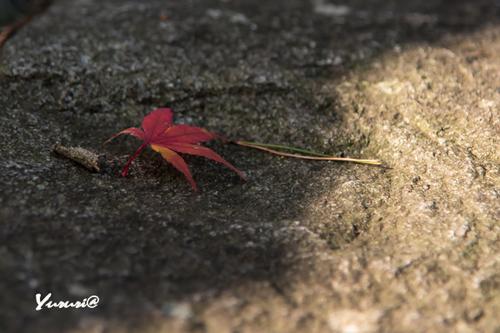 盛岡城跡公園-4.jpg