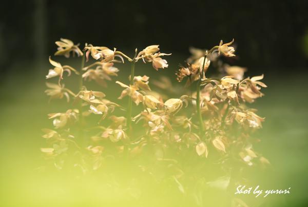 庭の花-32.jpg