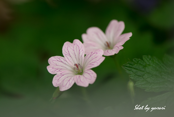 庭の花-35.jpg