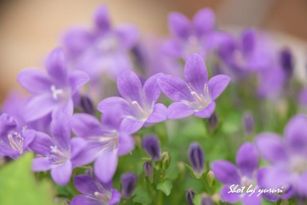 庭の花-37.jpg