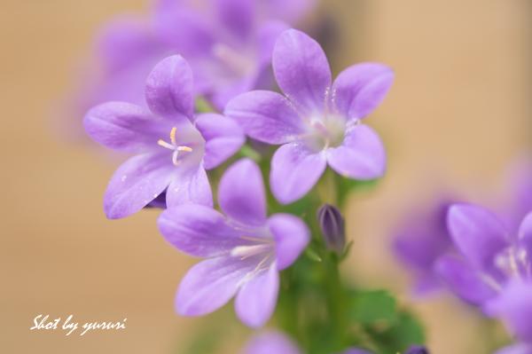 庭の花-38.jpg