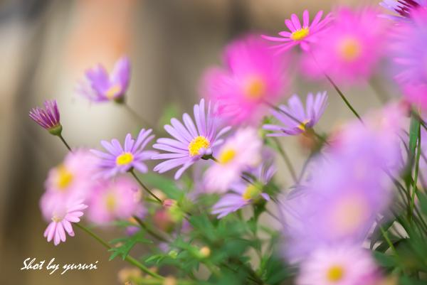 庭の花-39.jpg