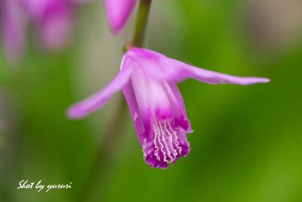 庭の花-43.jpg