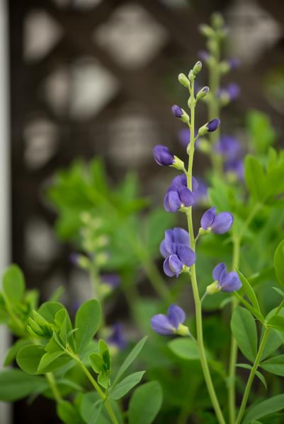 庭の花-45.jpg