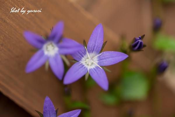庭の花-49.jpg