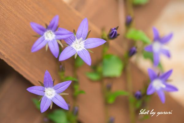 庭の花48.jpg