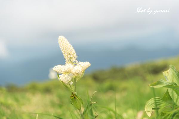 秋田駒-145.jpg