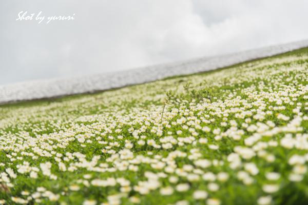 秋田駒-178-2.jpg