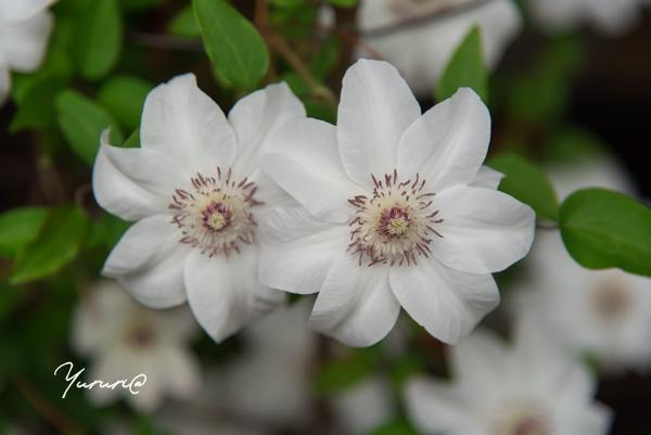 庭の花-13.jpg