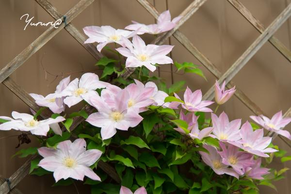 庭の花-14.jpg