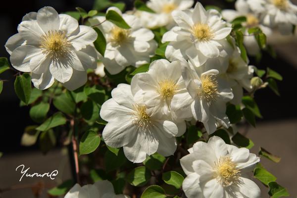 庭の花-16.jpg