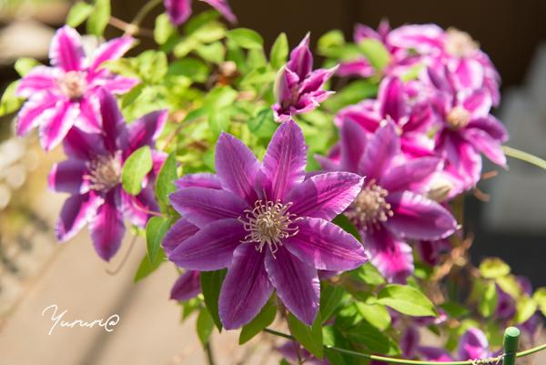 庭の花-17.jpg